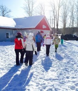 "Students walking towards the sugar-shack to ""sugar-off"""